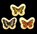 Plastic Limoges<br>42 x 32mm - Butterfly Assortment<br>1 dozen for