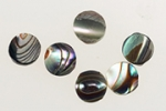 Abalone 5mm<br>2 Gross For