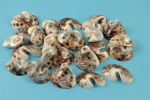 Assorted Cowrie Shells<br>With 1 Hole<br>1 Pound For.
